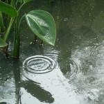 日本の広い地域で大雨というわけだから…