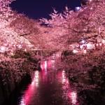 春→花見→桜→千本桜 酒がすすみまくるこの名曲に改めて心奪われてみる